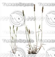 Plant set 002
