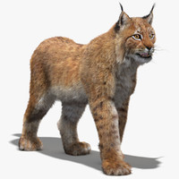 eurasian lynx fur rigging animation 3d model