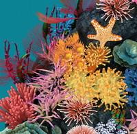 directx coral