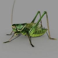 grasshopper grass 3d model