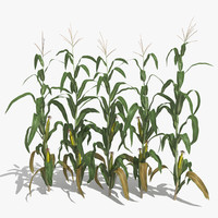 Corn Stalks Set