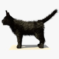 3d model black cat fur