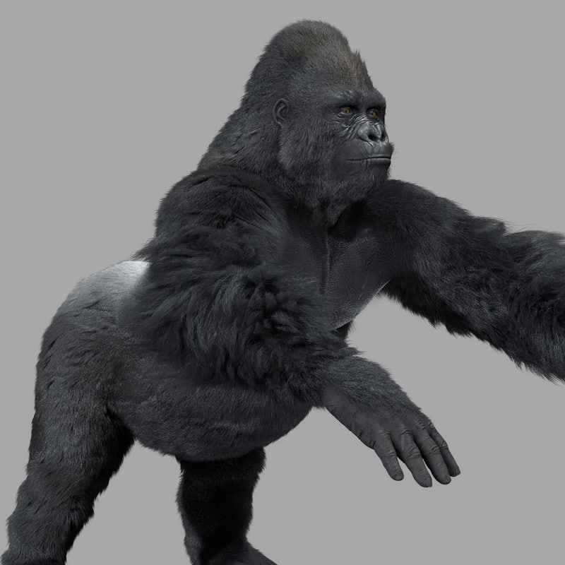gorila-base.jpg