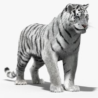 3d max tiger white rigged cat