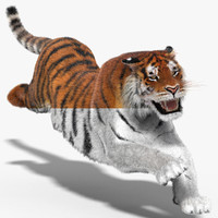 tiger fur hair animation 3d model