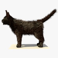 3d brown havana cat fur