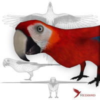Macaw red simple