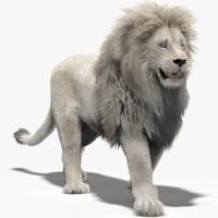 lion white fur rigging animation 3d model