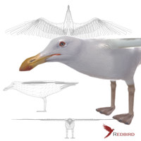 3d seagull simple model