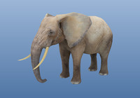 3ds max elephant rigged unity