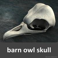 3d barn owl skull model