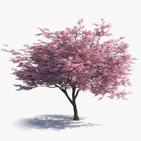 3d japanese sakura tree bark