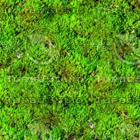 Mossy ground 26