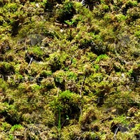 Mossy ground 24