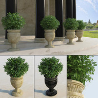 traditional entrance plant 3d model