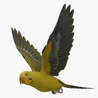 melopsittacus undulatus budgerigar yellow 3d obj