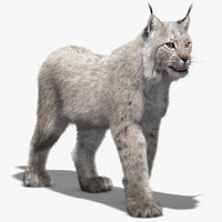 3d eurasian lynx white fur model