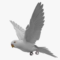 obj melopsittacus undulatus budgerigar white