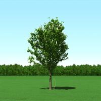 trees modelling 3d model