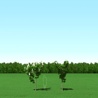 free max mode trees 118 300 cm