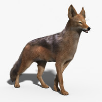 3d jackal fur rigged model