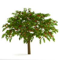 3d peach tree model