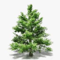 3d model spruce pine trees