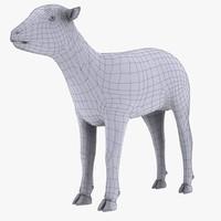 maya lamb sheep