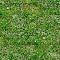 Grass 34