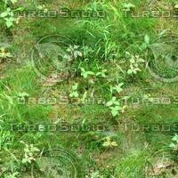 Grass 35