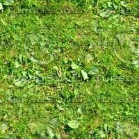 Grass 36
