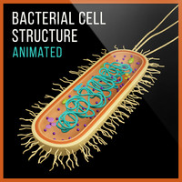 3d bacterial cell model