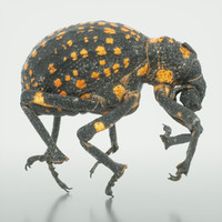3d brachycerus ornatus beetle model