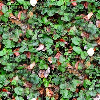 Groundcover 29
