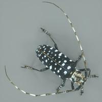 3ds max calloplophora sollii beetle