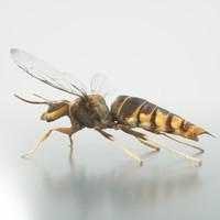 maya vespa velutina variana