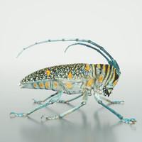 3d zographus regalis centralis model