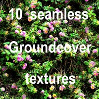 Groundcover Collection 3