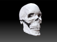 scull polys jaw 3ds