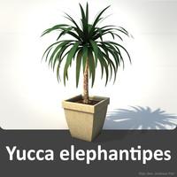 3d yucca elephantipes model