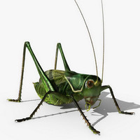 3d grass hopper model