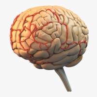 3dsmax brain details
