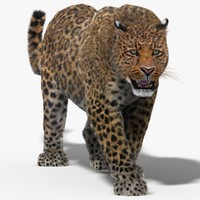leopard fur cat animation 3d model