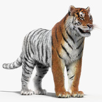 3d tigers fur modeled