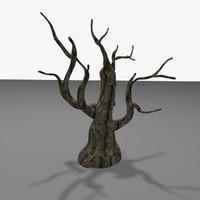 max old tree