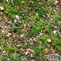 Grass with autumn leaves 36