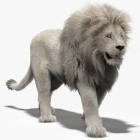 3ds lion white fur mane