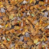 Leafy ground 26