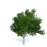 obj green oak