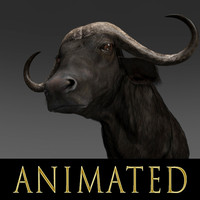 3d buffalo animations model